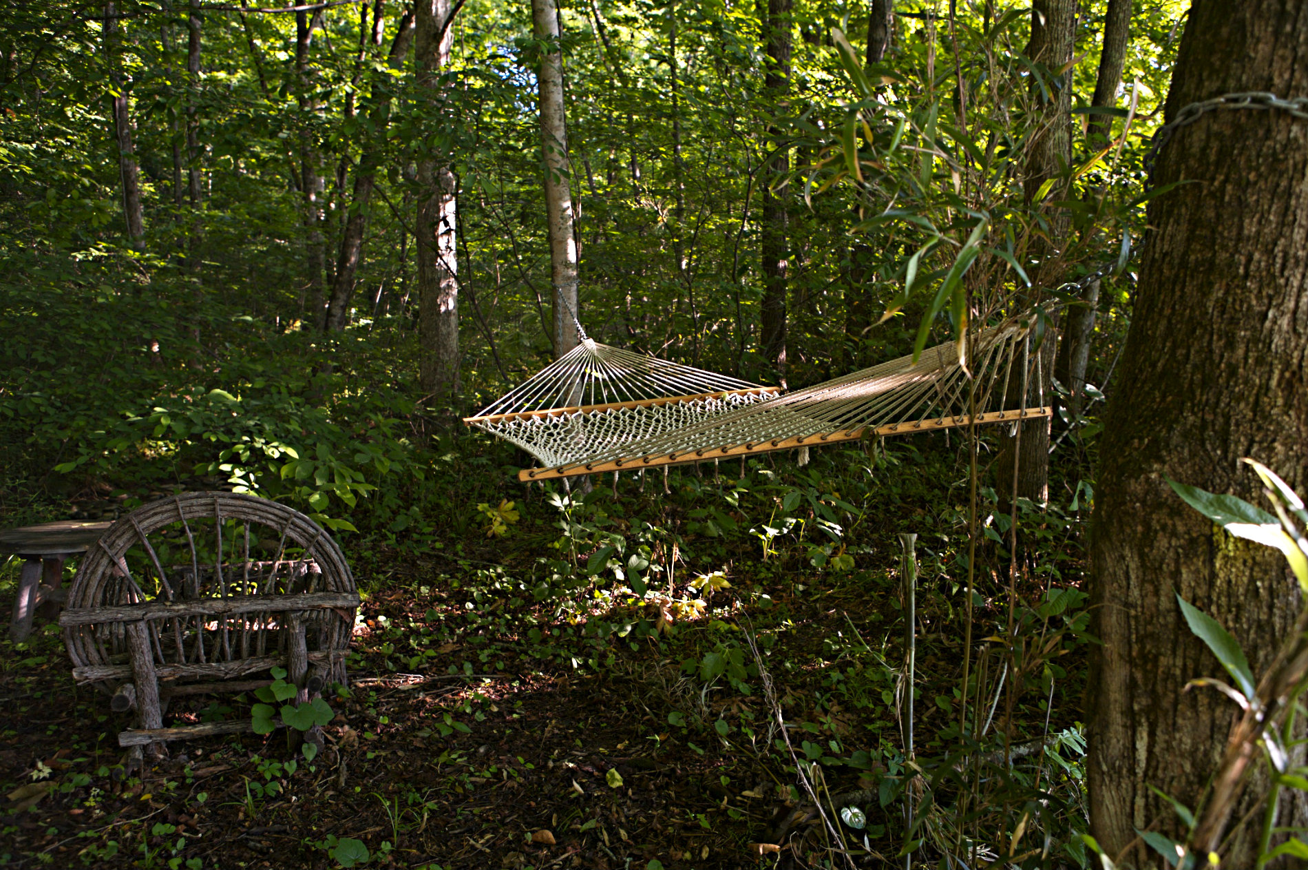 Hammock hanging in forest surrounded by green trees
